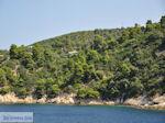 Beboste berghellingen Koutsouri Skiathos foto 2 - Foto van De Griekse Gids