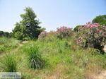 Beschermd gebied Koukounaries - Skiathos - foto 6 - Foto van De Griekse Gids