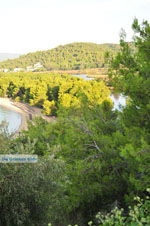 Koukounaries | Skiathos Sporaden | De Griekse Gids foto 4 - Foto van De Griekse Gids
