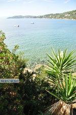 Megali Ammos (Ftelia) | Skiathos Sporaden | De Griekse Gids foto 15