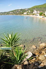 Megali Ammos (Ftelia)   Skiathos Sporaden   De Griekse Gids foto 16