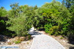 Kastro | Skiathos Sporaden | De Griekse Gids foto 3