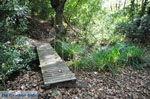 Wandelpaden bij Klooster Kechria | Skiathos Sporaden | De Griekse Gids foto 17